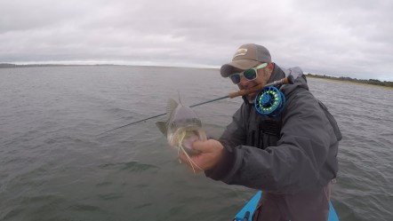 Northshore Fall striper on the fly