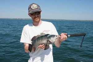 Buzzards Bay Black Sea Bass bite is on fire!