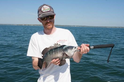 Buzzards Bay Black Sea Bass bite is on fire!