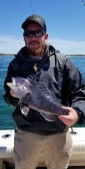 Buzzards Bay Black Sea Bass