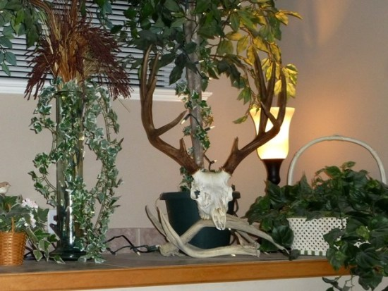 DIY European Deer Skull Mount