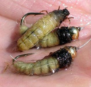 ... sharks caddis larva fly pattern!