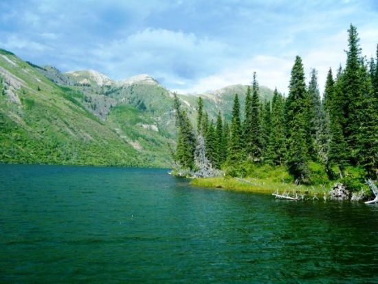 ... fly fishing wild rocky mountain rainbow trout in the alpine lakes of British Columbia!