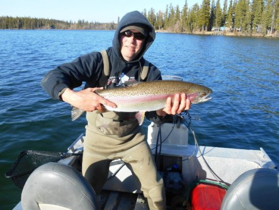 Big Northern BC Rainbow Trout - flyguys.net
