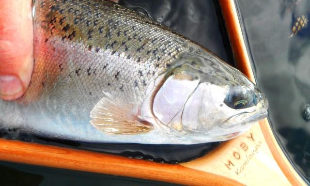 Friday 13 | A Northern BC Fall Fishing Report