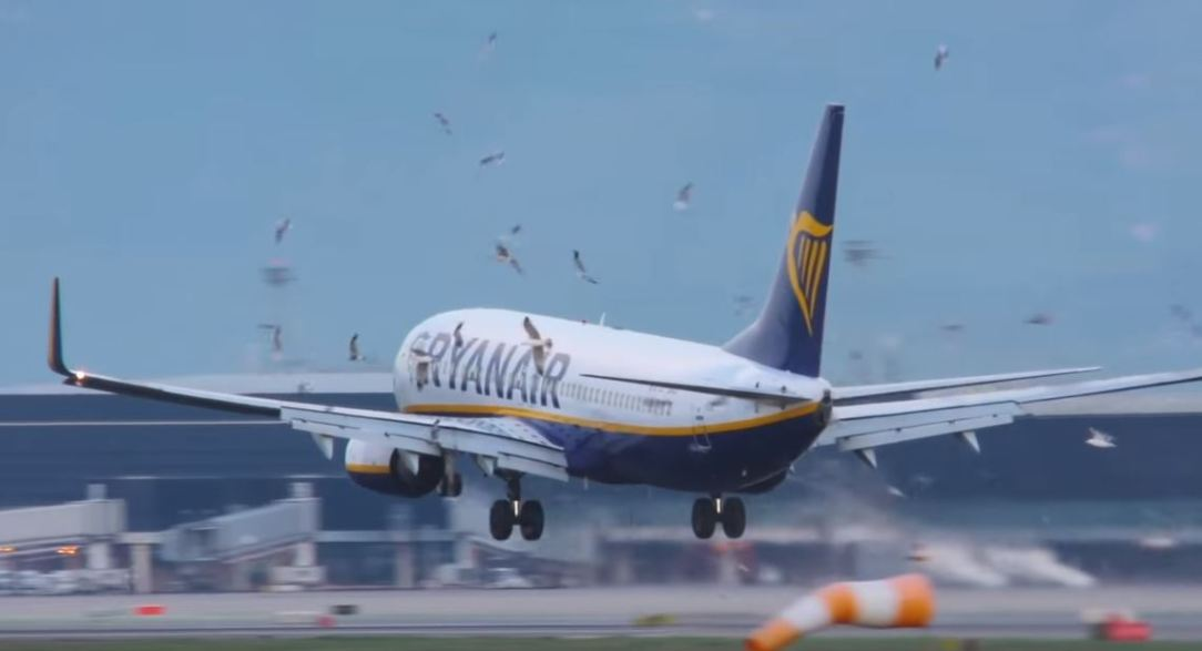 Ryanair B737 Bird strike