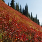 Color on Hoodoo Pass