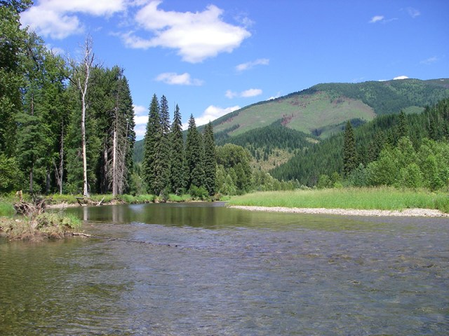 North Fork of the Coeur d'Alene River in July