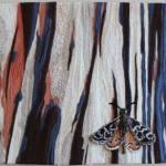 Eucalyptus Melliodora artwork