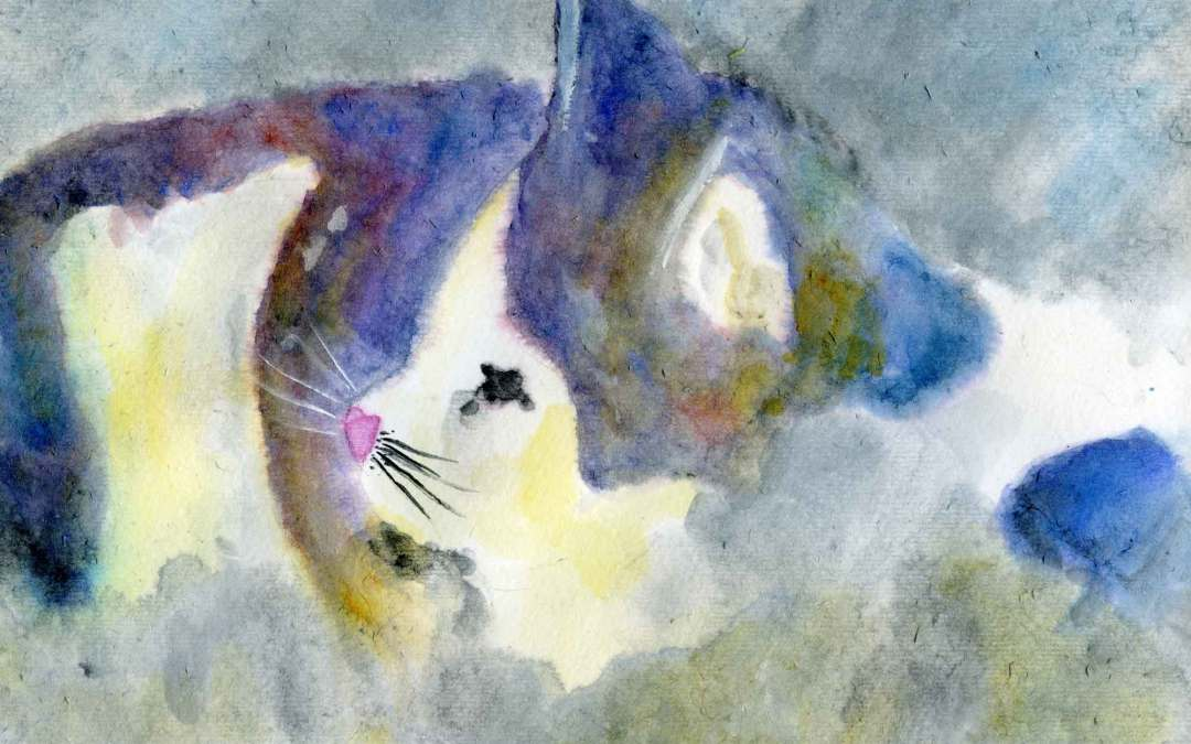 Black and white cat – Daily Painting #594