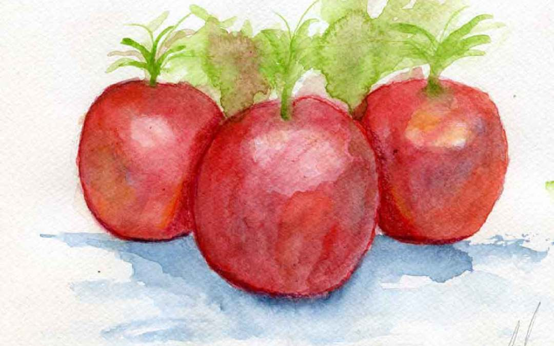 Three Tomatoes – Daily Painting #687