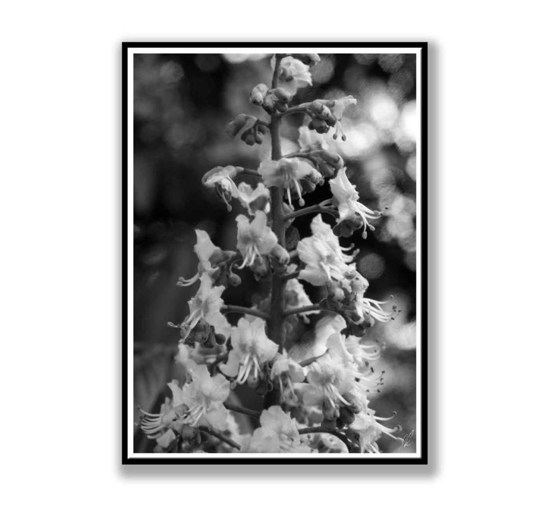 Black and White horse chestnut
