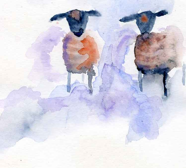 Two sheep (#337)