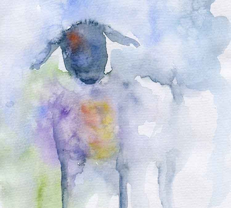 One sheep (#339)