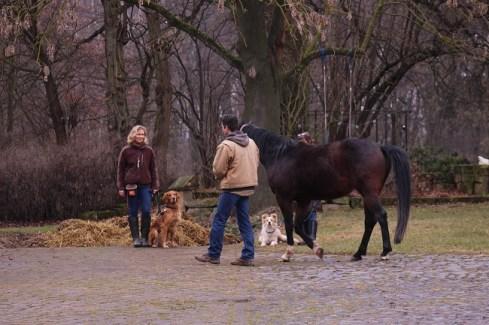 Pferdebegegnung