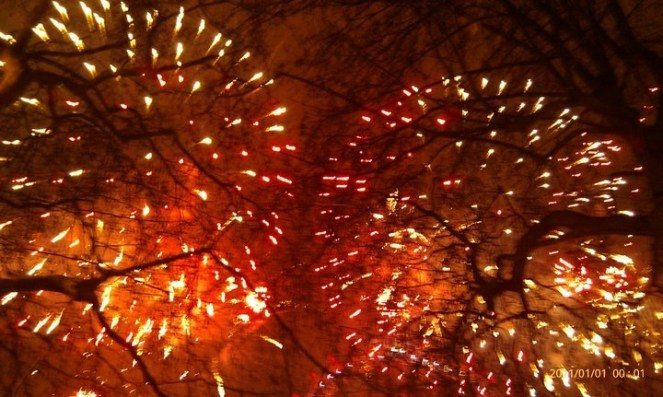 Fireworks viewed through tree branches