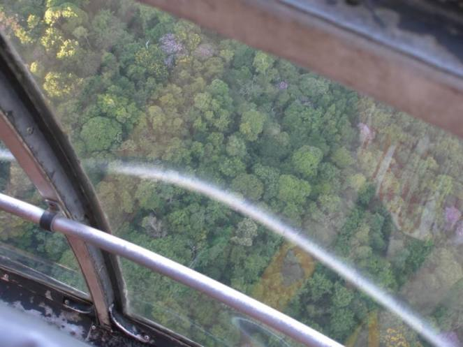 Looking down, out of the cable car in Rio de Janeiro, onto the tree tops