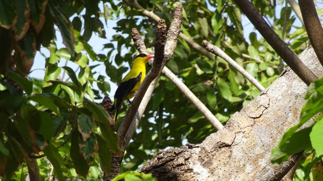 Club Paradise Palawan - Bird