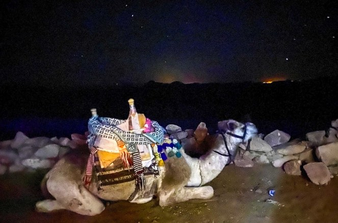 A camel resting at night on Mount Sinai, Egypt