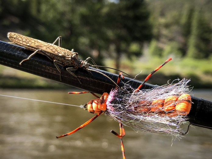 Salmon Fly With Salmon Fly Pattern