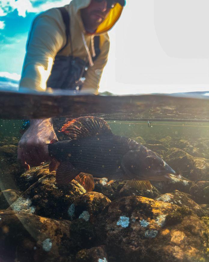 grayling underwater