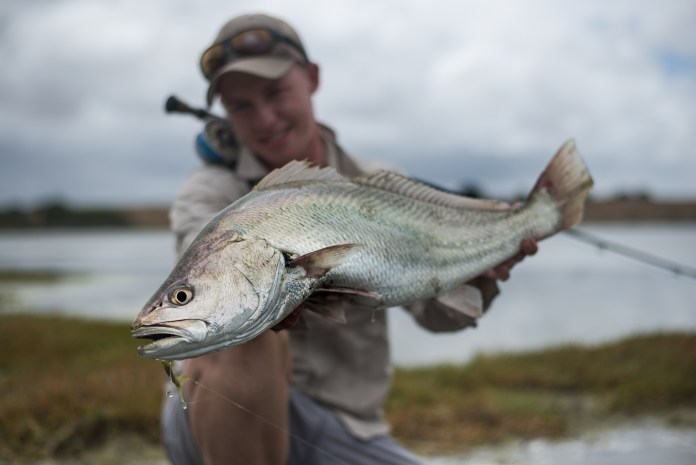 Kob Fish South Africa