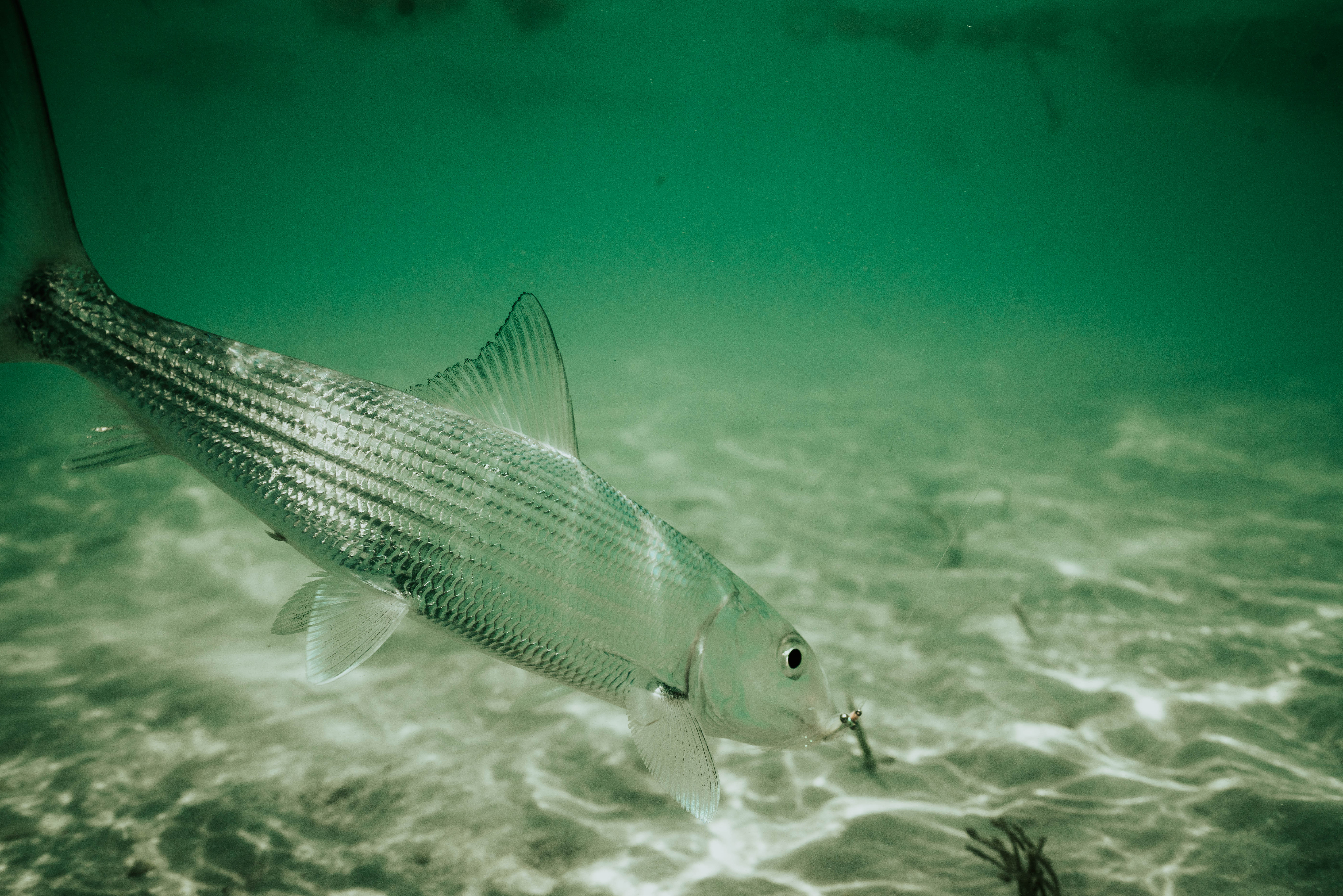 613463a840a 8 Tips  Bonefish On The Fly - Flylords Mag