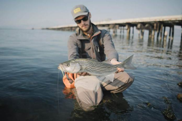 Tyler Graff Flylords Striped Bass Pier