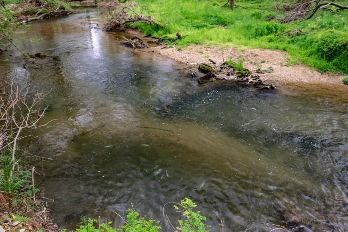 Donegal Creek Fish Kill