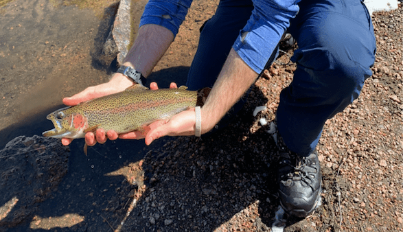 South Platte River Colorado Rainbow Trout