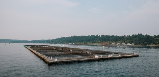 Fish Farming Pen Puget Sound (Ramon Dompor/The Seattle Times)