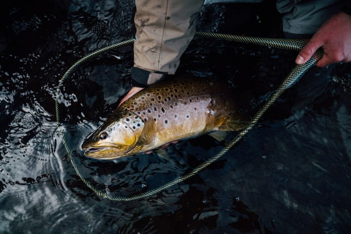 A Water Temperature Guide to Trout
