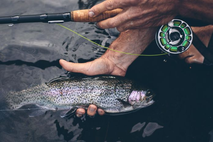 rainbow trout and reyr rod