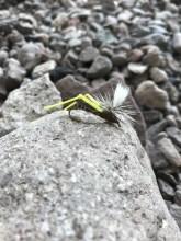 Size 8 Grasshopper