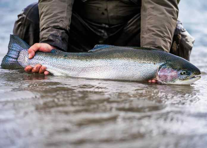 Rainbow trout from being held properly