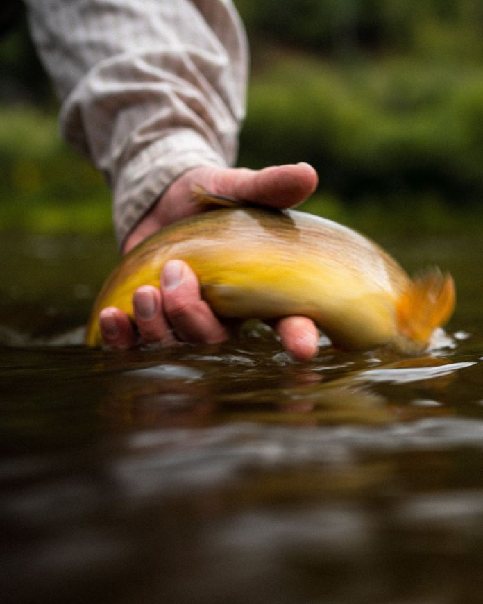 fish release