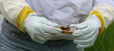 Inspecting Queen Bee