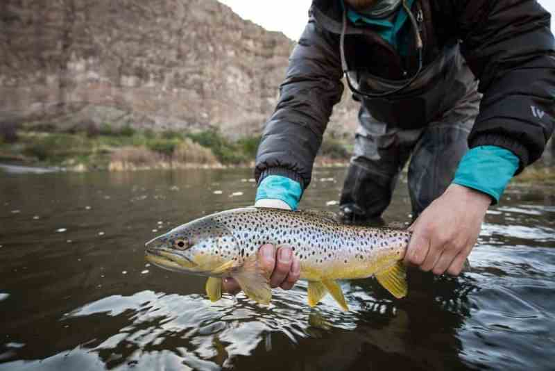 3 weight fly rod uses