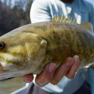 Best weight fly rod for bass