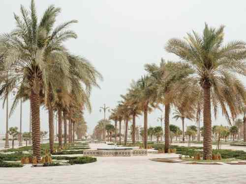 Date palms and fountain in Abu Dhabi