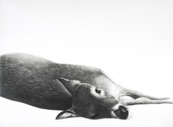 Stafford's Deer