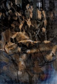 "Michelle Saffran's art, ""Seen Then Gone"""