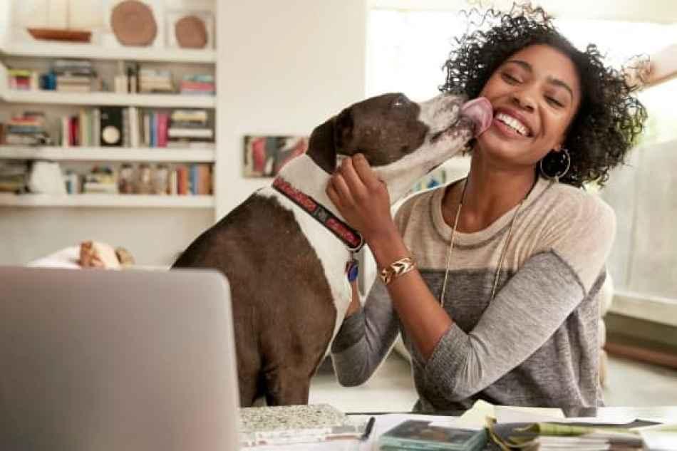 Los estudios muestran que las mascotas proporcionan una serie de beneficios emocionales y de salud mental.
