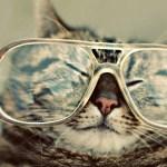 眼鏡の発祥起源はどこ?日本に伝えたのは歴史的超大物だった。