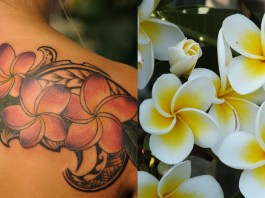 plumeria tattoo ideas and meanings