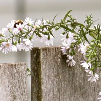 In the Fall Garden with Asters and Finches