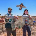 El Faunístico realizo una nueva liberación de Aves