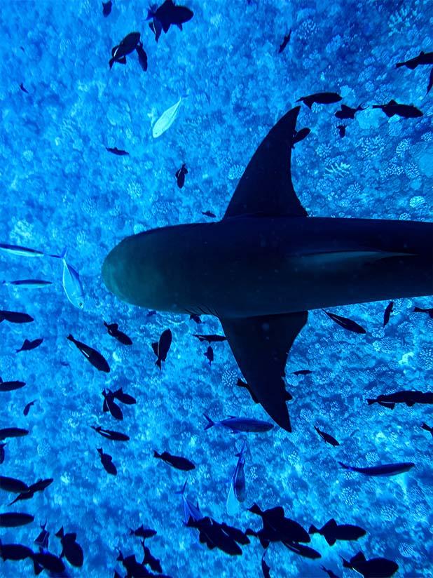 Visiter Bora Bora Plongée avec requin - FMR blog voyage é