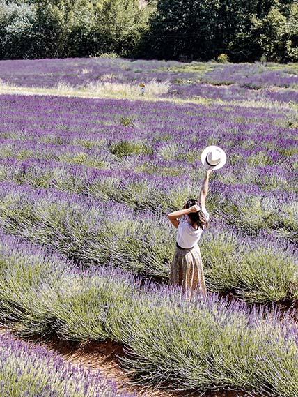 Plateau claparades Provence Lavande
