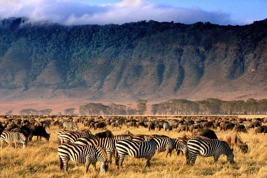 Safari Tanzanie Parc Serengeti - FMR blog voyage